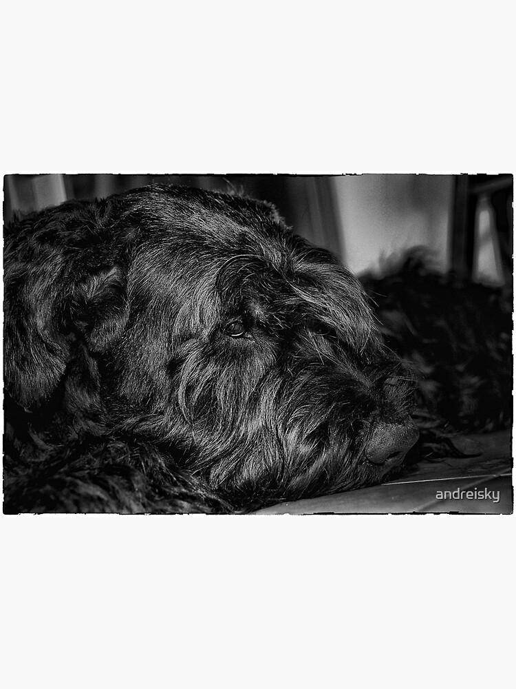 Portrait of black dog by andreisky