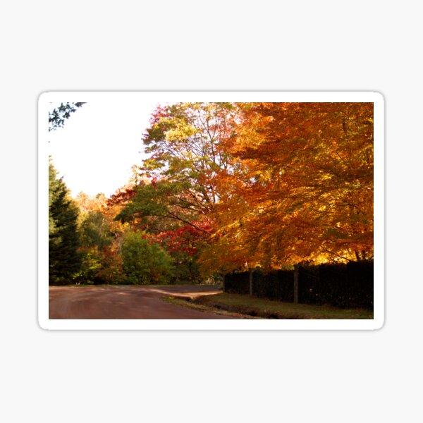 Autumn Afternoon on Mt Macedon, Victoria Sticker