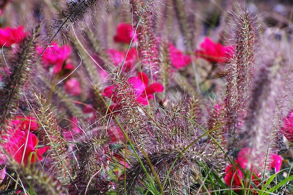Wild Rose and Pompas Grass by Katagram