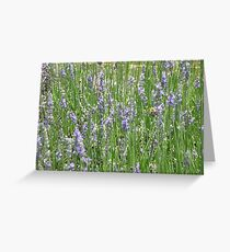 Field of Lavender Greeting Card