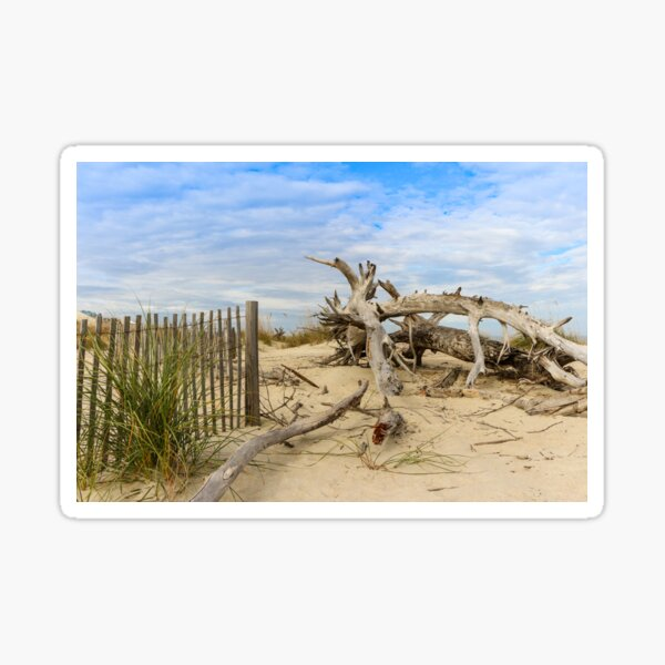Tybee Island Fence & Driftwood Sticker