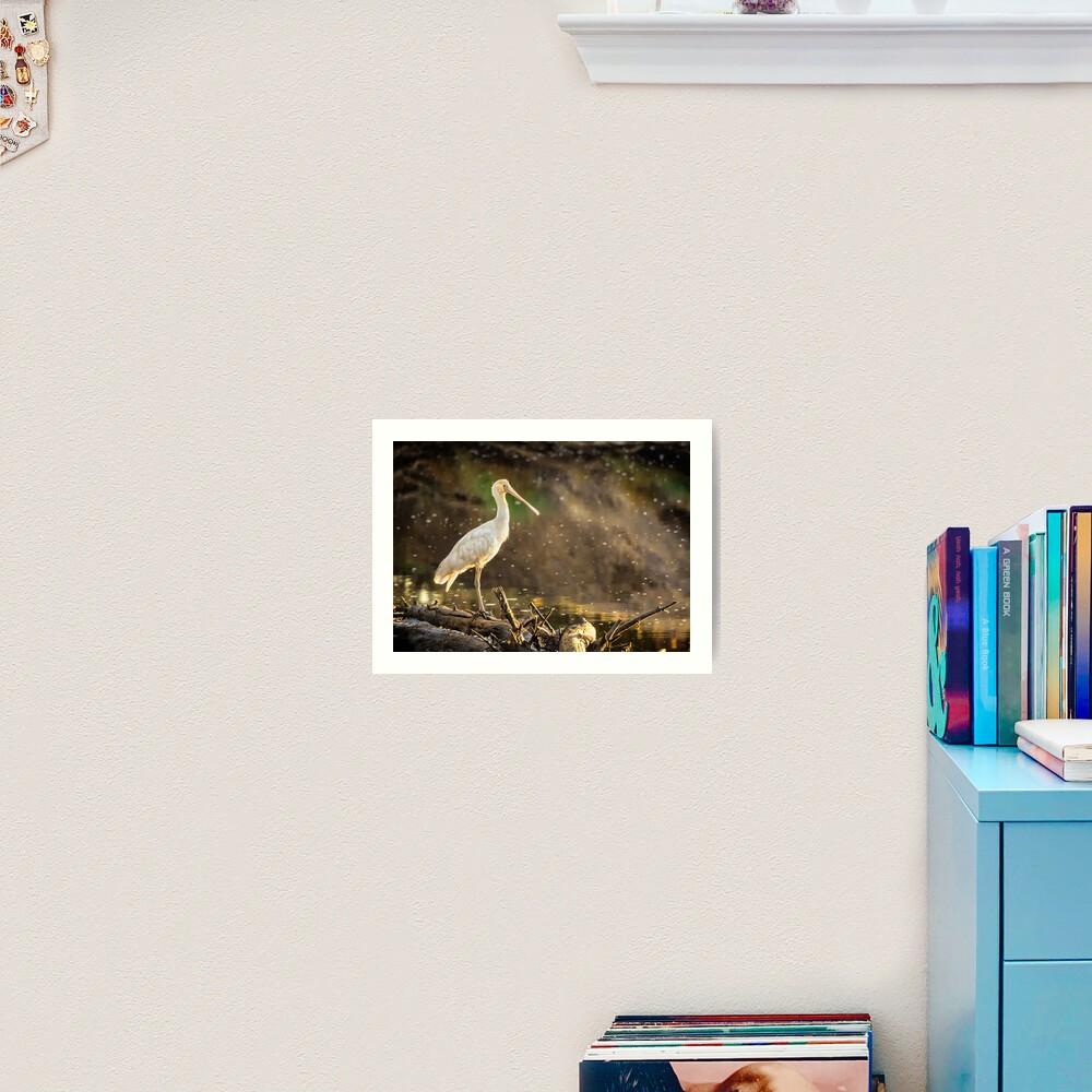 Yellow-billed Spoonbill Art Print