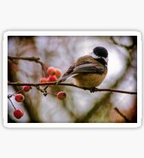 Relationships Are Like Birds Sticker