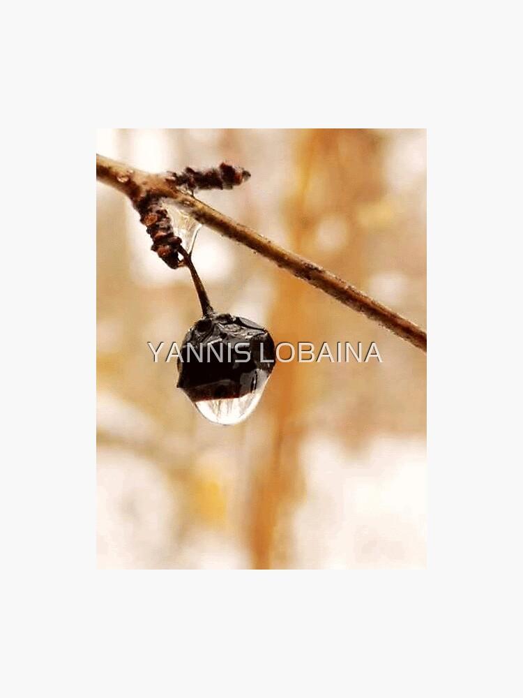 Magic raindrops  by Yannis Lobaina by lobaina1979