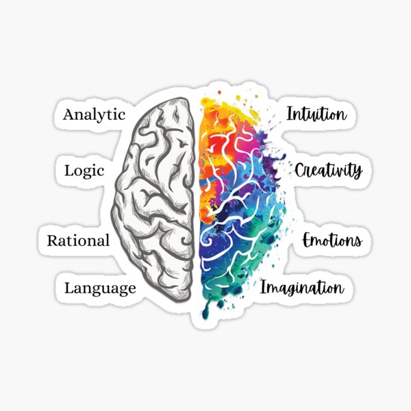Right and Left Brain Functions Sticker