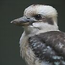 Laughing Kookaburra on a steamy afternoon by Jacqueline  Murphy