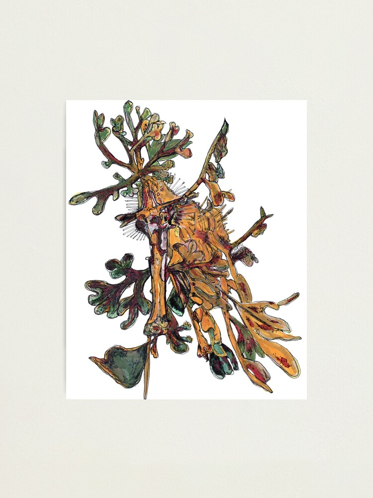 Alternate view of Carlee the Leafy Sea Dragon Photographic Print