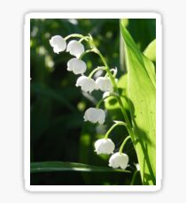 Lily-Of-The-Valley Sticker
