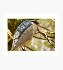 Night Heron Portrait Art Print