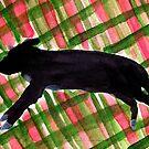 Black Dog on Spring Plaid by danvera