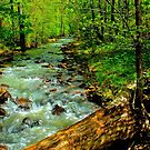 Woodland Stream by NatureGreeting Cards ©ccwri