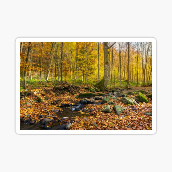 brook among the trees Sticker