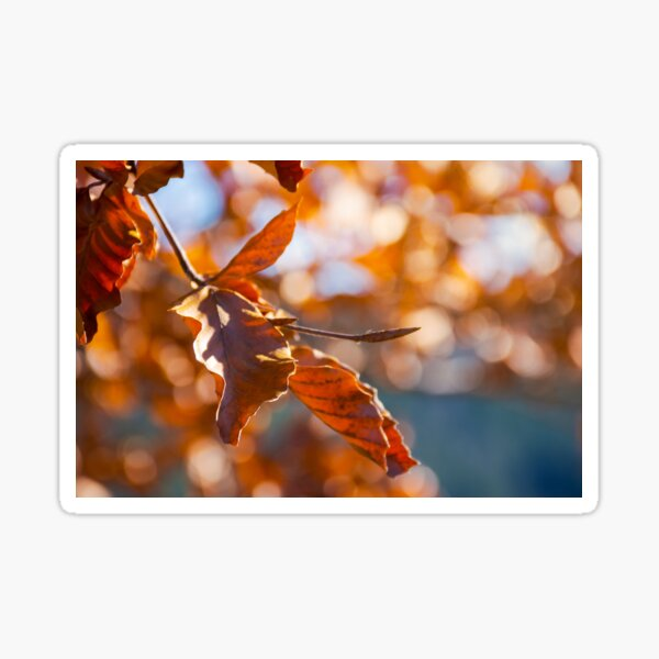 brown foliage on the branch in sunlight Sticker