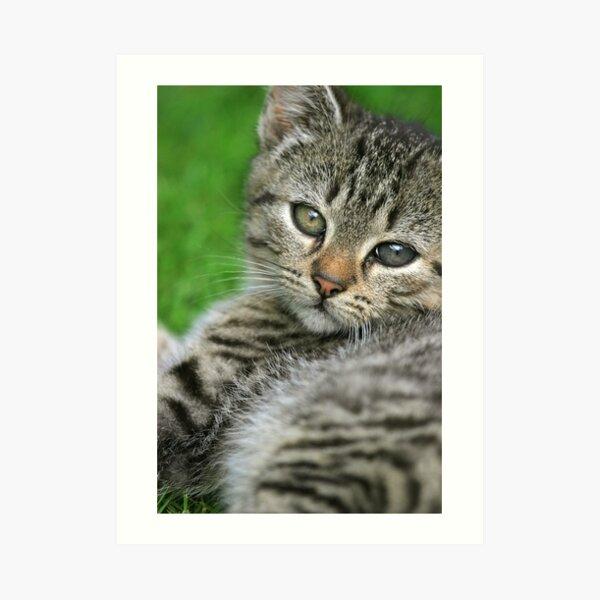 Little kitten portrait Art Print
