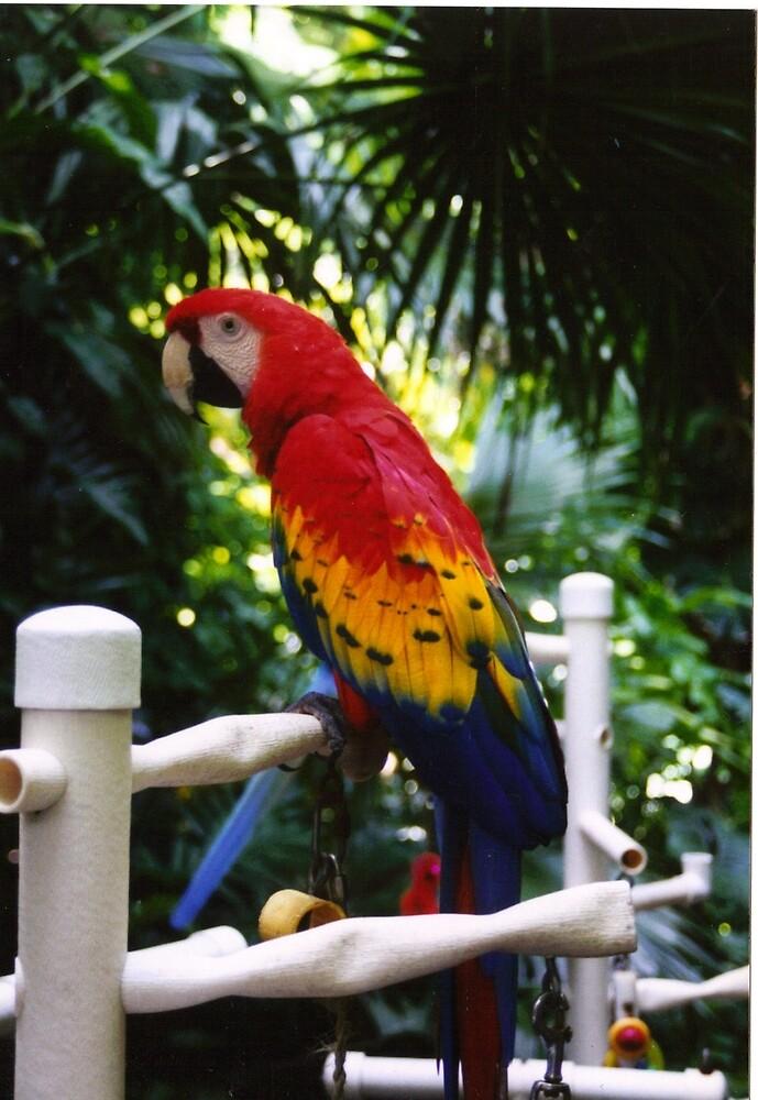 Scarlet Macaw by Sheri Ann Richerson