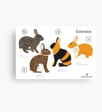 Rabbit colour genetics - Extension gene Canvas Print
