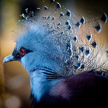 Victorian Crowned Pigeon  by ginawaltersdorf