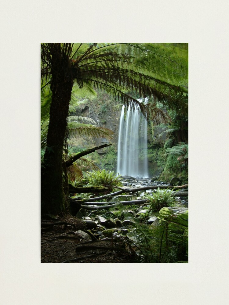 Alternate view of Joe Mortelliti Gallery - Hopetoun Falls, Otways Forest, Victoria, Australia. Photographic Print
