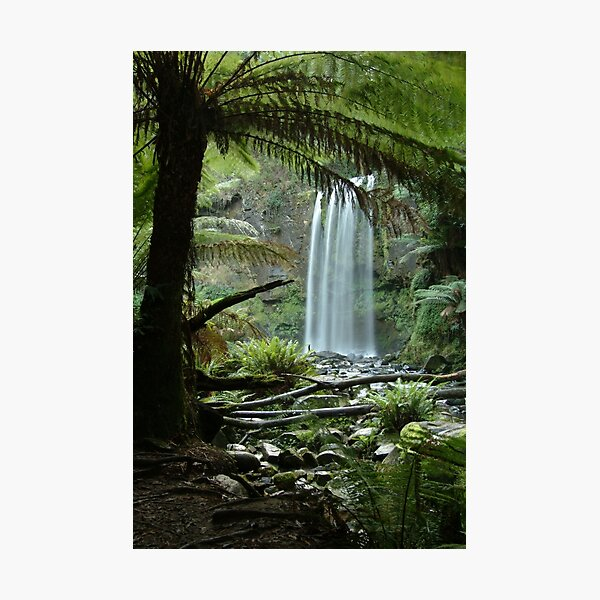 Joe Mortelliti Gallery - Hopetoun Falls, Otways Forest, Victoria, Australia. Photographic Print