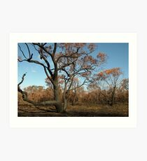 Joe Mortelliti Gallery - Scorched Otways, near Anglesea, Otways Forest, Victoria, Australia. Art Print