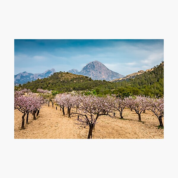 Almond blossom and mountains Photographic Print