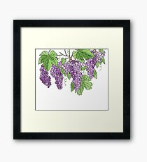 Wine making graps Framed Print