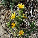Desert flower by bubblehex08