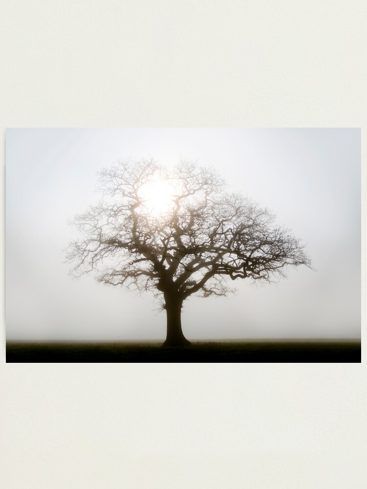 Alternate view of Misty Morning Photographic Print