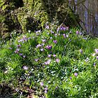 Spring has Sprung by Jo Nijenhuis