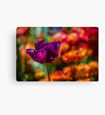 Magenta Tulip 1 Canvas Print