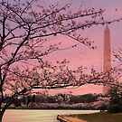 Washington Monument Cherry Blossom Festival by Shelley Neff