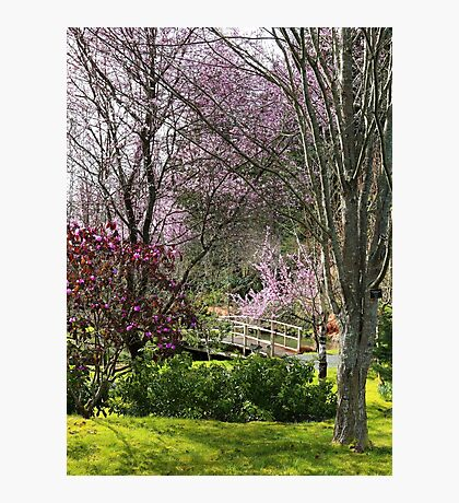 Almost Noon with Plum Blossoms in Japanese Garden Photographic Print