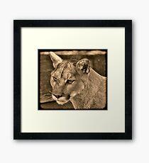 Panther Portrait  Framed Print