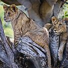 The Baby Cubs by Kathryn Potempski