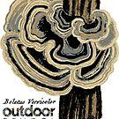 Boletus Versicolor by Multnomah ESD Outdoor School