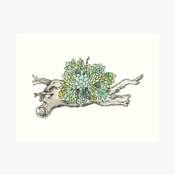 Succulent Driftwood 1 Art Print