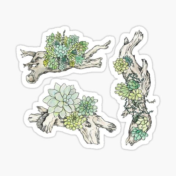 Driftwood Succulents 3 Sticker