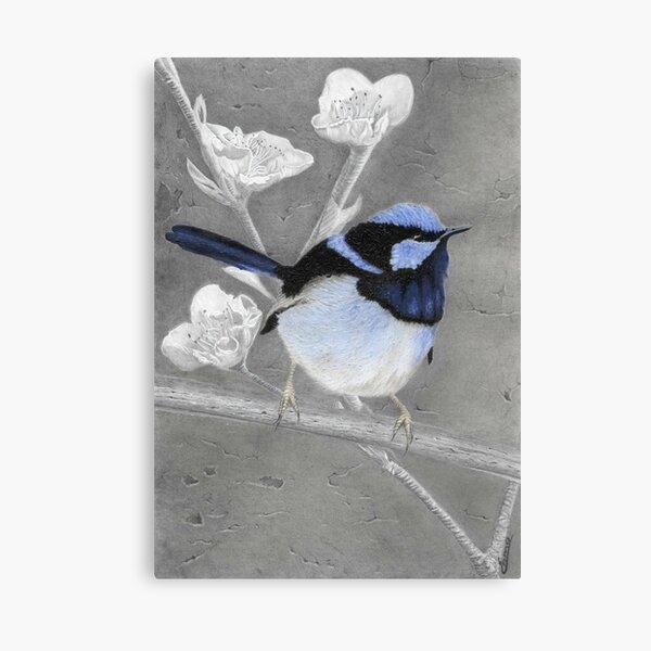 Blue Wren Pencil Drawing Gouache Painting Canvas Print