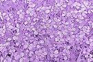 Purple by PhotosByHealy