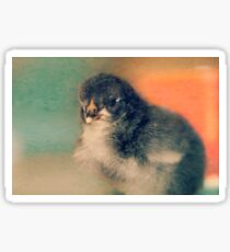 A Chick in Pastels Sticker