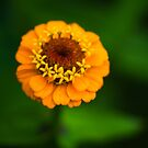 Orange and Green - Beautiful Together by Clare Colins
