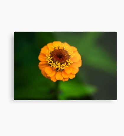 Orange and Green - Beautiful Together Metal Print