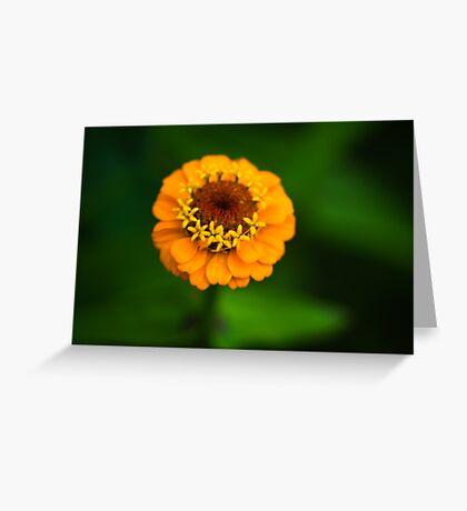 Orange and Green - Beautiful Together Greeting Card