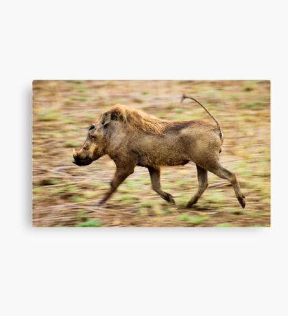 THE WARTHOG, Phacochoerus aethiopicus - The signal catcher ! Canvas Print