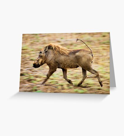 THE WARTHOG, Phacochoerus aethiopicus - The signal catcher ! Greeting Card