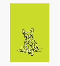 Green Frenchie Photographic Print