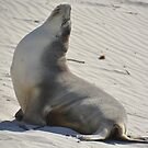 Yoga seal by Candy Jubb