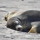 Sleeping mama seal by Candy Jubb