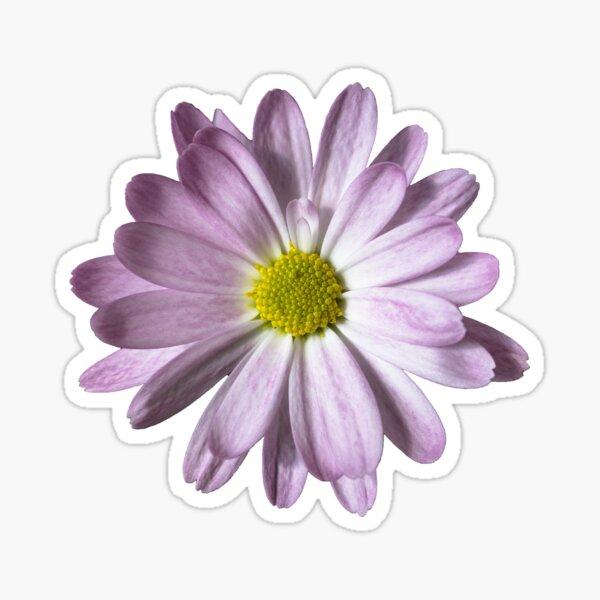 Purple & White Daisy Sticker