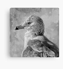 Seagull Portrait Canvas Print